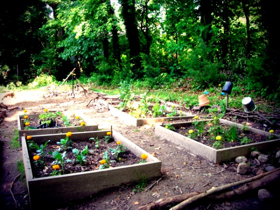 North garden under development