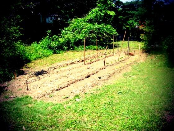 Community garden with the neighbors